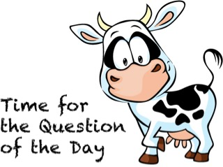 Cow Question (2)